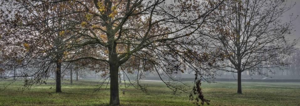 Una legge regionale per gli alberi