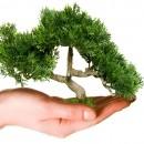La legittimazione dei Comitati e delle Associazioni che si propongono di tutelare l'ambiente a impugnare con ricorso al Giudice Amministrativo provvedimenti lesivi di interessi ambientali