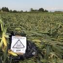 OGM: è ora di dire basta!