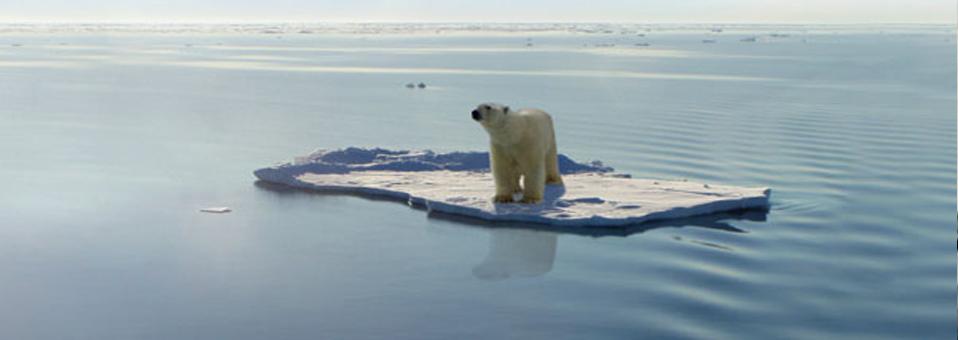 Democrazia climatica tra pinguini stanchi ed orsi impagliati. La Scuola #ClimateChaos
